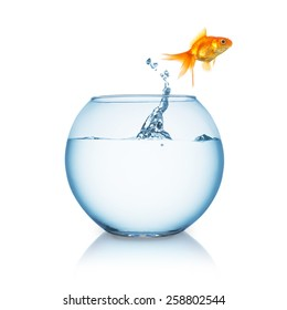 Goldfish jumps in to liberty out of a fishbowl