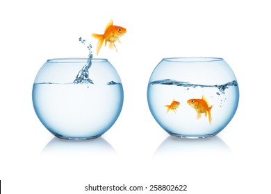 goldfish jumps out of a fishbowl to his family