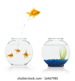 A goldfish leaping from a shared, bare fishbowl to a more decorative one.