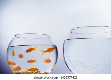 A Goldfish looking out of a small crowded bowl into a larger empty bowl