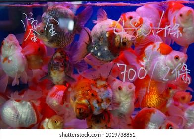 Goldfish Market, Hong Kong