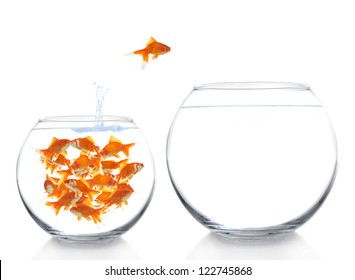 goldfish moving to a bigger house