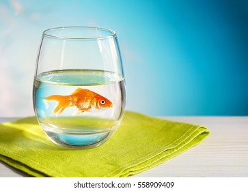 Goldfish in a round glass of clean clear water on a wooden table and a light green napkin close-up macro on a blue background. The concept of clean drinking water and the environment ecology.