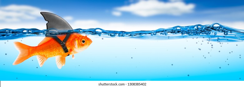 Goldfish With Shark Fin Costume With Blue Sky And Clouds - Brave Ambitious Entrepreneur/ Business Vision Concept