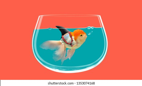 Goldfish with shark fin swim in fish bolw, Gold fish in water. Mixed media
