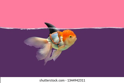 Goldfish with shark fin swim in violet water and pink sky, Gold fish with shark flip . Mixed media