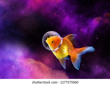Goldfish in the sky with Astronaut hat, Gold fish swim in the galaxy  space,Mixed media. enigmatic stories, fantasy, fairy tales, Goldfish is an astronaut.