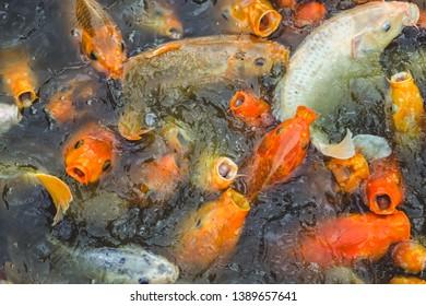 Antiques Koi Carassius Auratus Goldfish Gold Pond Japan China Sculpture Fish Decoration Products Hot Sale Decorative Arts