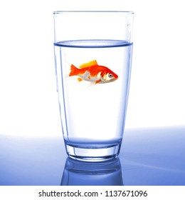 goldfish in water glass fishtank isolated on white background