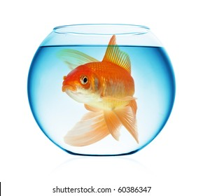 A goldfish in the water isolated on white