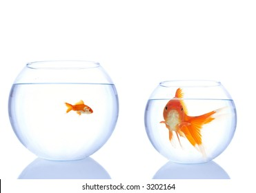 goldfishes in the bowls, small has more space, big one is not happy about it