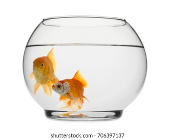 Goldfishes in Fishbowl