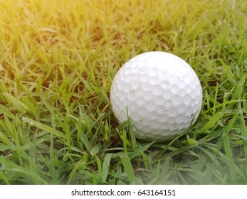 Golf ball in the field.