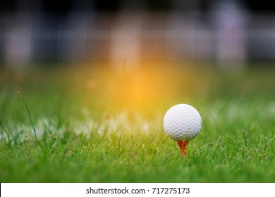 The golf ball is in green lawn. Warm orange light