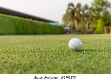 Golf ball on beautiful green lawn Golf is a sport that must be played on the lawn.