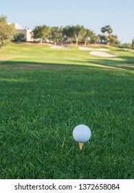 golf ball on the green on sunny day with background of plants and grass