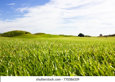 Golf course in Belek. Green grass on a field. Blue sky, sunny day