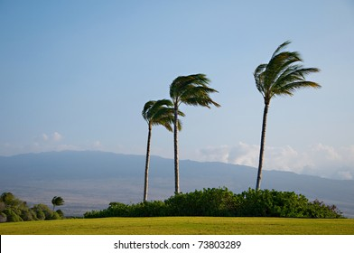 Golf Course Hawaii Palm Trees