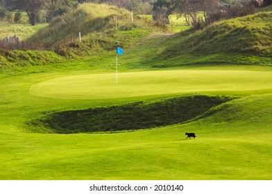 golf course landscape with cat walking on the green