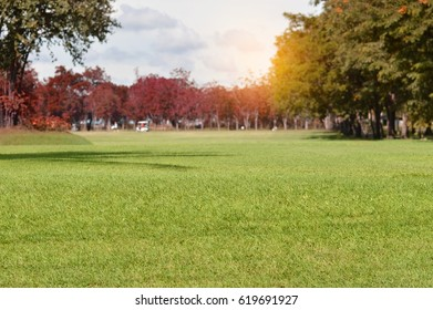 Golf course with light in the autumn
