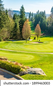 Golf course with yellow sand bunker and fantastic forest view.