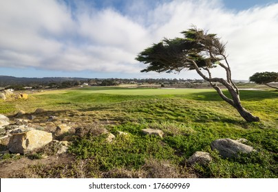 Golf field at pacific coast at 17 mile drive in California
