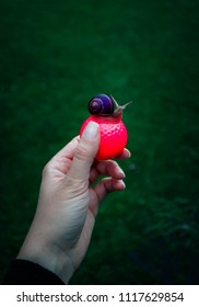 Golf pink ball hold in a hand, with a snail sitting above. Slow and lazy game play concept.