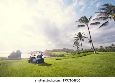 Golf place with gorgeous green and palm tree over blue sky with ocean view.