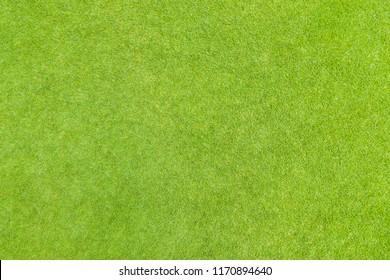 Golf puttin green grass texture top view