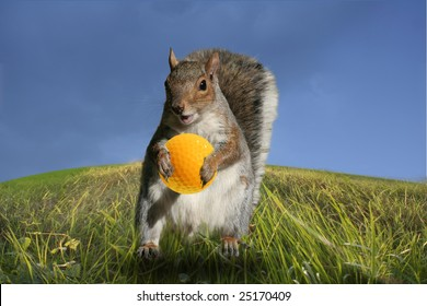 The golf squirrel helping putting a yellow ball in hole.