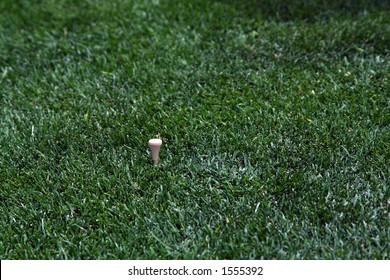 Golf tee with grass after golf ball has been hit