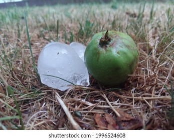 golfball size hailstones next to unripe apple in meadow