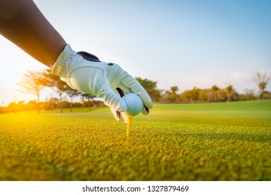 A golfer glove hand putting golf ball on tee in golf course with sunlight ray and golf course view background.