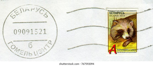 GOMEL, BELARUS, 30 NOVEMBER 2017, Stamp printed in Belarus shows image of the Nyclereutes procyonoides, circa 2014.