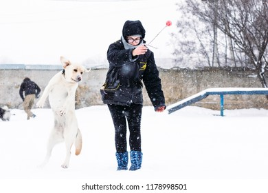 Gomel, Belarus - January 08, 2017: Girl playing with labrador in winter on the playground