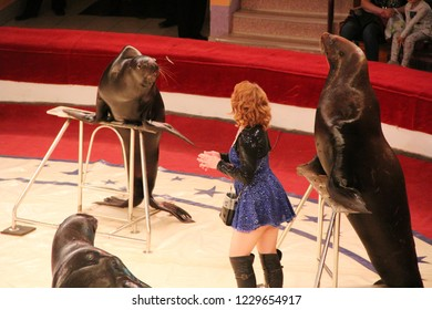 Gomel / Belarus - May 20, 2018: Trained sea lions and fur seals on circus arena. Marine mammals performing in arena of circus. Performance of fur seals and sea lions in circus