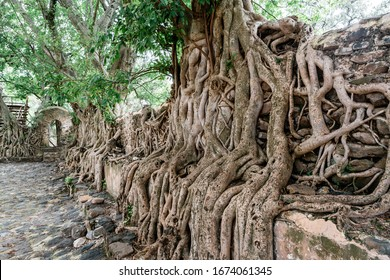 Gonder, Ethiopia - May 26, 2016: Tree roots growing over stone walls at Fasiladas' Bath, Gondar, Ethiopia