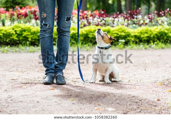 Good Citizen Dog Training: obedient dog training to walk on leash with owner