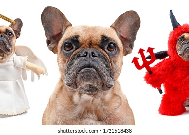 Good dog, bad dog concept with French Bulldog head with small dog in angel costume and devil costume on each side of shoulder on white background