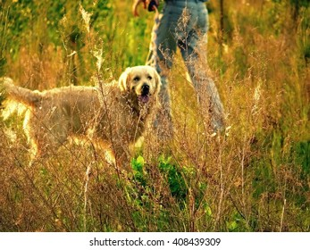 A good dog day in the sun on nature in Ukraine