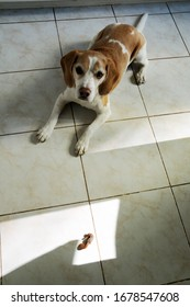 Good dog waiting patiently for a permission to take a treat