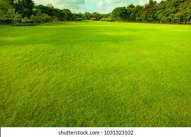 good environment green grass ground