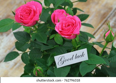 Good Morning Card Pink Wild Roses Stock Photo Edit Now 776199709