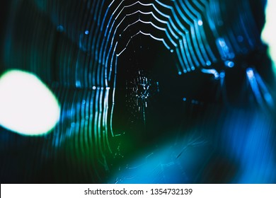 good mood concept, freshness in the morning, spider web and water drops, abstract boke background