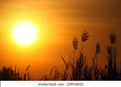 Good Morning Sunshine Images Stock Photos Vectors Shutterstock