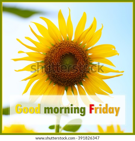 Good Morning Friday On Sunflower Background Stock Photo Edit Now