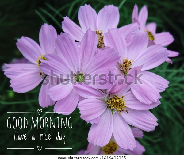 Good Morning Have Nice Day Stock Photo Edit Now 1616402035