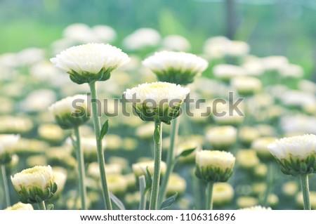 Good morning lovely white flower sunlight stock photo edit now good morning lovely white flower with sunlight mightylinksfo