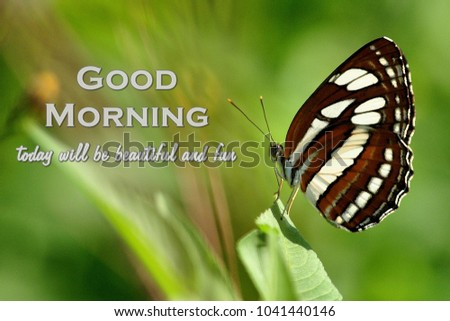 Good Morning Quotes Colorful Butterfly Stock Photo Edit Now