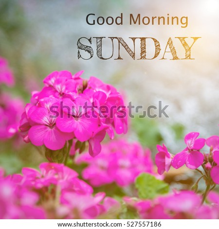 Good Morning Sunday Over Blur Flower Stock Photo Edit Now
